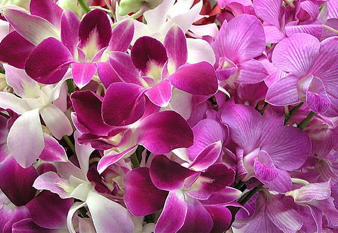 Семейство орхидей насчитывает примерно 25000 видов, а также около 100000...